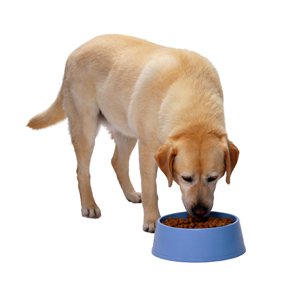 highly palatable feeds for dogs